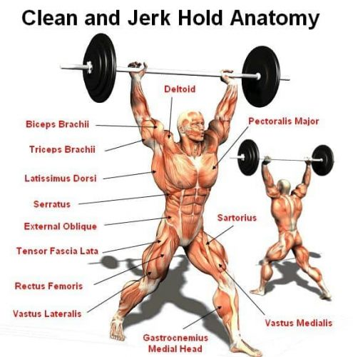 Clean-and-Jerk-Muscles