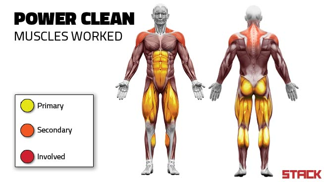 Power-Clean-and-Muscle-Clean-Muscles-Exercised